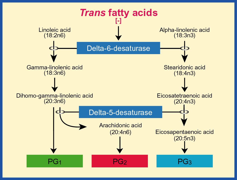 estearidonic acid 2