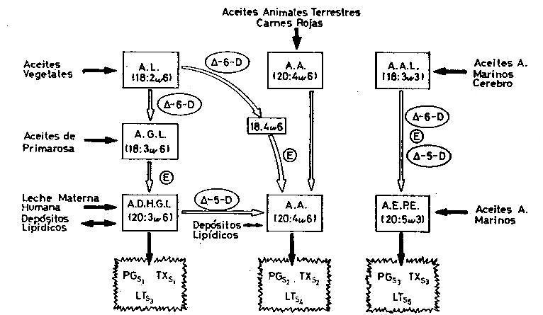 AGT 06