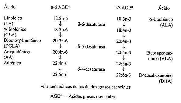 AGT 02