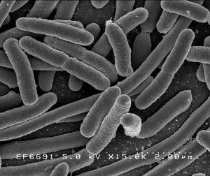 bakteri.jpg