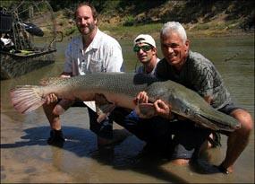 http://surabaya.detik.com/images/content/2009/11/13/466/alligator-gar-dalam.jpg